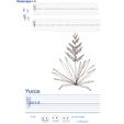 Imprimer l'exercice d'écriture sur le yucca