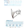 Exercice d'écriture et de graphisme : J et JONQUILLE