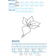 Imprimer la fiche de graphisme : R et RADIS