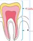 coloriage de la dent