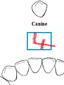 compter les dents