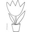 Imprimer le coloriage d'une grosse tulipe dans son pot