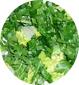 mettre la salade dans les assiettes