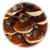 lentilles posées dans la pomme de pin