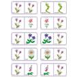 Dominos fleurs planche 1