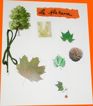 Herbier des arbres