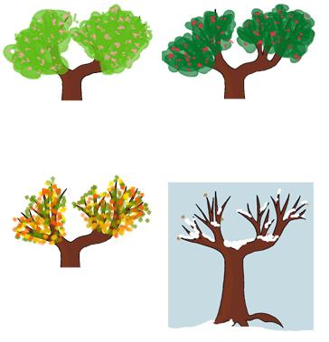 Evolution de l'arbre au fil des saisons