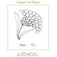 Fleur de l'imagier de Pâques