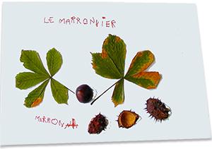 Les arbres et leurs fruits d\'automne - Tête à modeler