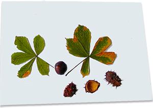 Coller les fruits d'automne de l'arbre