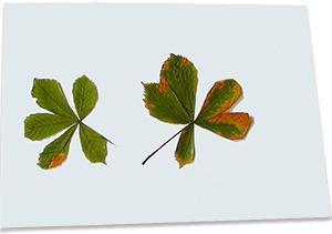 Coller les feuilles d'arbre d'automne