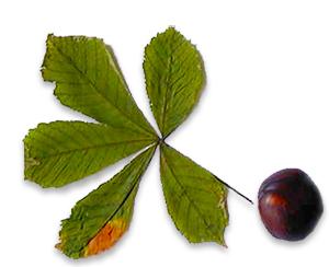 Ramasser des feuilles et marrons