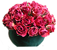 piquer les roses dans la mousse