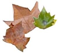 Ramasser les feuilles d'automne