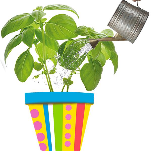 Arroser les plantation en pots