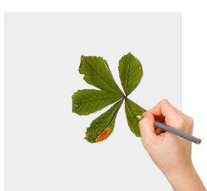 Dessiner les feuilles de marronnier