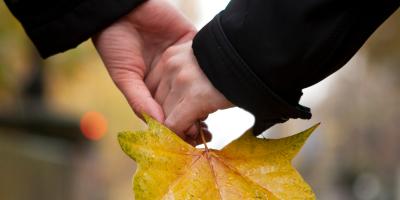 Parfois utilisé à mauvais escient, ce très célèbre dicton est connu de nos amis jardiniers et nous rappelle qu'il est heure d'effectuer les plantations d'automne avant l'entrée dans l'hiver ou du moins à y penser. Retrouvez des infos sur ce dicton et bien