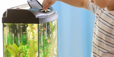 Exemple d'un écosystème miniature : l'aquarium, un exemple d'écosystème. Comprendre ce qu'est un écosystème est une chose, mais savoir l'expliquer à son enfant n'est pas toujours