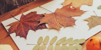 RÈaliser un herbier des arbres pour mieux connaitre leur forme, leurs fruits et leurs feuilles
