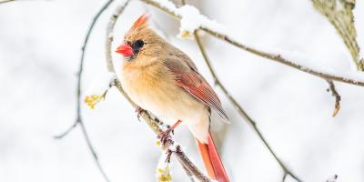 Quand les jours se raccourcissent et que les températures baissent, les oiseaux migrateurs partent vers des régions et des pays chaud...