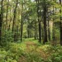 forêt d'érable