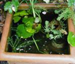 bassin d'observation