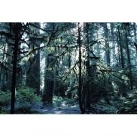 Forêt humide tempérée
