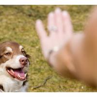 Quelle conduite à tenir en cas de morsure par un animal, que dois-je faire sir mon enfant est mordu par un animal ?