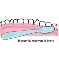 Sens du brossage des dents