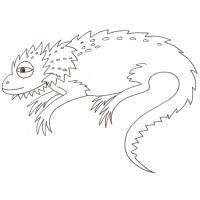 dessin de caméléon