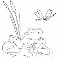 Coloriage animaux divers : grenouille