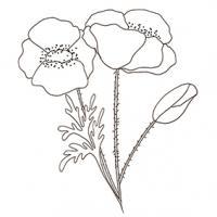 Coloriage Fleur Coucou.Coloriages Sur Les Fleurs Pour Enfant