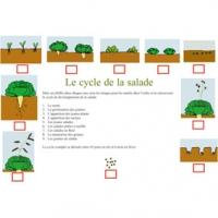 Connaître le cycle de vie des salades