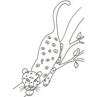 Animaux de la jungle, coloriage animaux de la jungle
