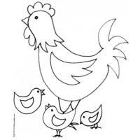 dessin d'une poule