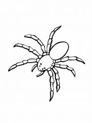 Coloriage araignée #01
