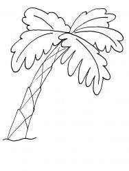 Palmier dessin #03
