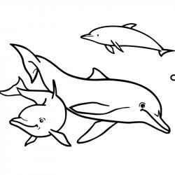 Coloriage dauphin : voici un dessin à imprimer avec un superbe dauphin. Un coloriage à imprimer sur le thème des dauphins et des animaux marins - Page 14