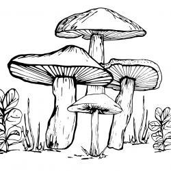 Voici un coloriage d'un champignon à imprimer gratuitement. Un joli dessin à colorier sur le thème de l'automne et de la nature. Modèle 05