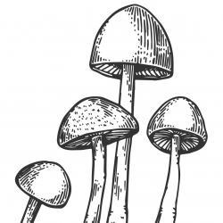 Voici un coloriage d'un champignon à imprimer gratuitement. Un joli dessin à colorier sur le thème de l'automne et de la nature. Modèle 11