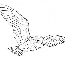 Retrouvez un coloriage de hibou ! Un dessin à imprimer gratuitement sur le thème des animaux de la forêt - Page 08
