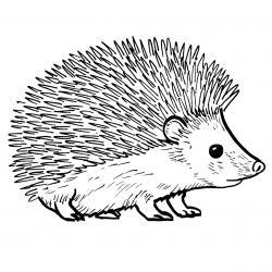 Voici un coloriage de hérisson à imprimer gratuitement. Un dessin de hérisson à imprimer pour tous les petits amoureux des animaux. Page 05