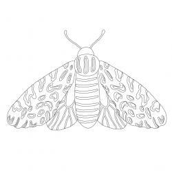 Coloriage papillon : voici un dessin à imprimer avec un joli papillon. Un coloriage à imprimer sur le thème des papillons - Page 4