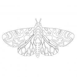 Coloriage papillon : voici un dessin à imprimer avec un joli papillon. Un coloriage à imprimer sur le thème des papillons - Page 9