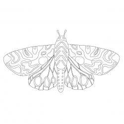 Un Papillon Facile A Colorier