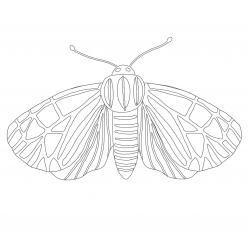 Coloriage papillon : voici un dessin à imprimer avec un joli papillon. Un coloriage à imprimer sur le thème des papillons - Page 11