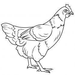 Coloriage poule : un dessin à imprimer gratuitement pour tous les petits amoureux des animaux de la ferme et de la basse cour. Page 09