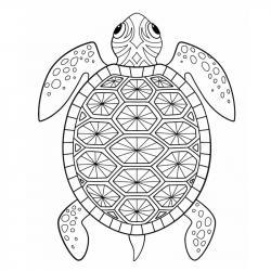Voici un coloriage de tortue à imprimer gratuitement. Un dessin de tortue à imprimer pour tous les petits amoureux des animaux de la mer. Page 04
