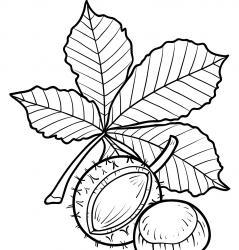 Dessins et coloriages d'arbre et de feuilles à imprimer pour le coloriage