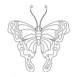 Imprimez facilement un coloriage papillon parmi notre sélection de dessins de papillons. Papillons de jour, papillons de nuit ! Coloriages de dessins sur les papillons et la vie de papillons. Livre de coloriage sur les papillons à imprimer